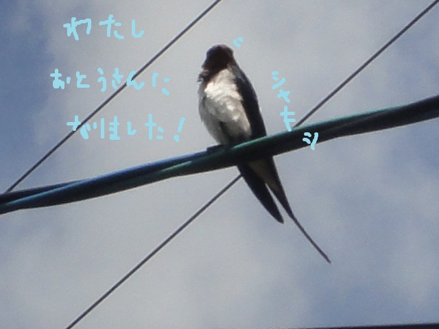 e0201009_2131163.jpg