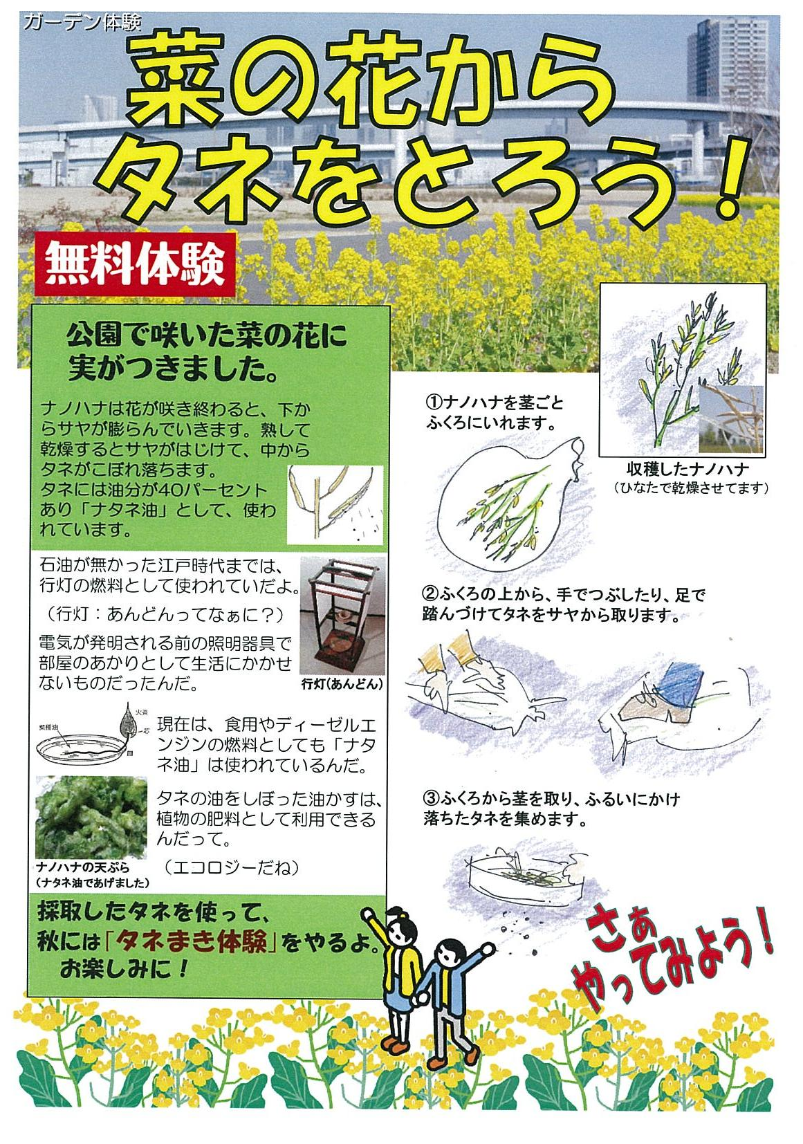 「ナタネ(菜の花の種)取り体験」をしたよ。_e0235911_21462884.jpg