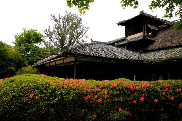詩仙堂 サツキの庭_e0048413_1959432.jpg