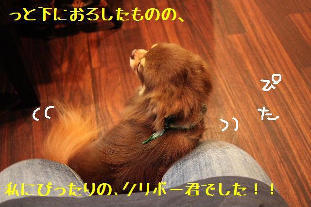 b0130018_12155525.jpg