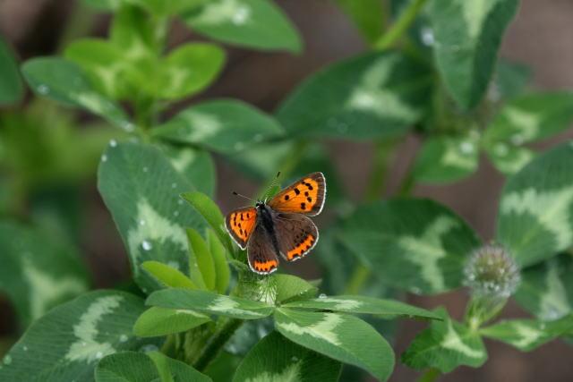 庭先の蝶_b0189231_12393157.jpg