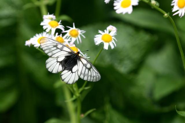 庭先の蝶_b0189231_12403923.jpg