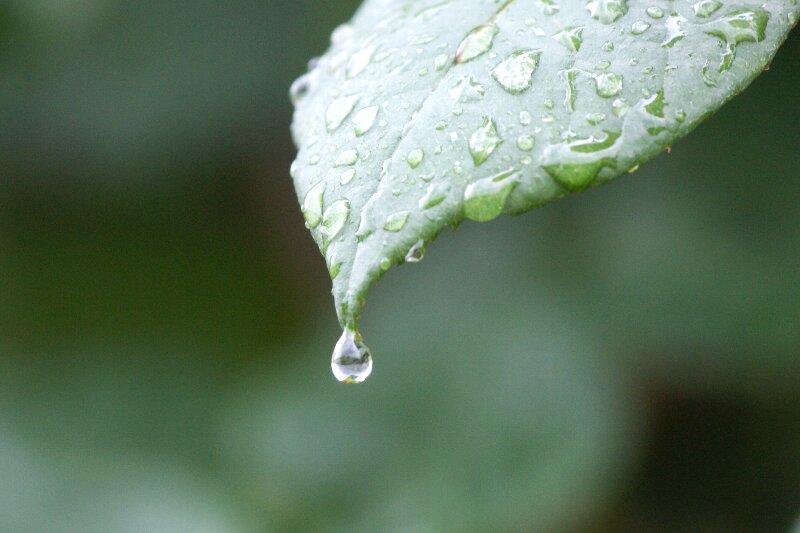 雨も似合うバラ!一層鮮やかに華やかに!★その4_a0122932_547471.jpg