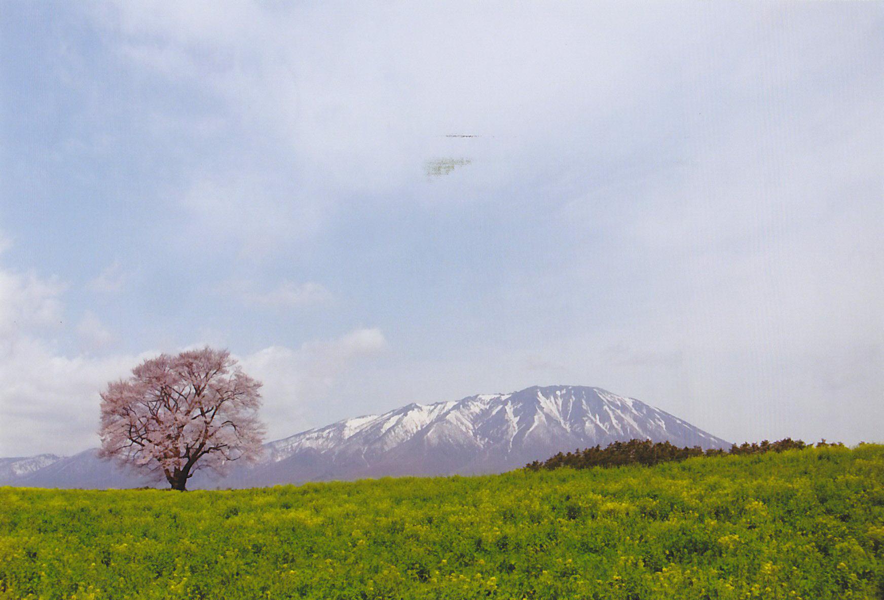 5月30日台風も去り晴天!!_c0070933_21533594.jpg