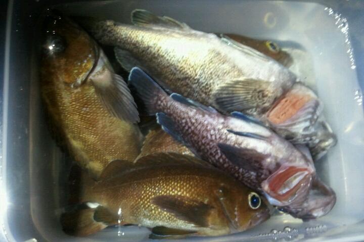 楽しい 釣り、料理_e0173533_18122426.jpg