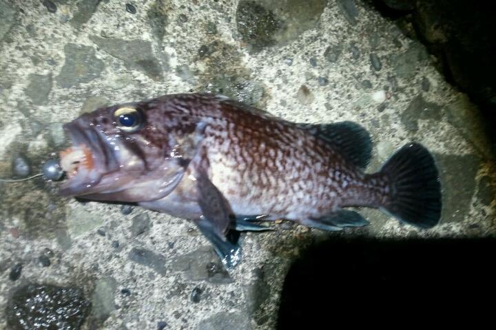 楽しい 釣り、料理_e0173533_1892036.jpg