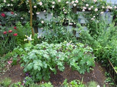 野菜の成長、早いなぁ。_e0097534_1422877.jpg