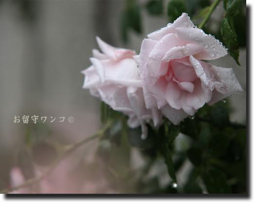 f0111147_1824736.jpg