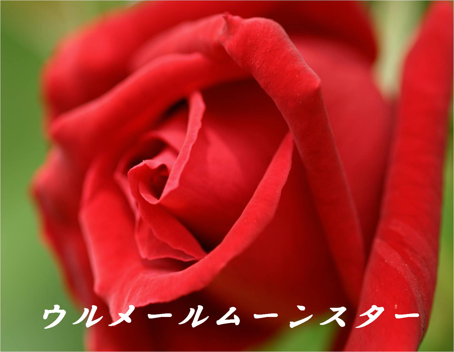 c0217255_1841981.jpg