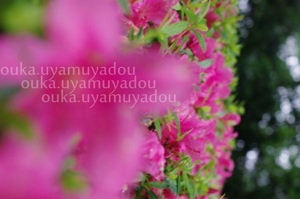 雨の靖国神社_a0157263_2263023.jpg