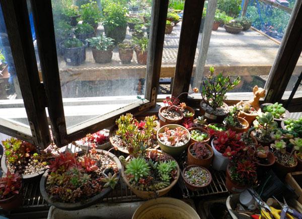 ヤマセの日。 多肉植物の寄せ植えなど_a0136293_1952035.jpg