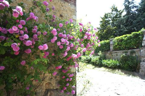 美しいバラの村「Gerberoy」(ジェルブロワ)_c0090198_3421491.jpg