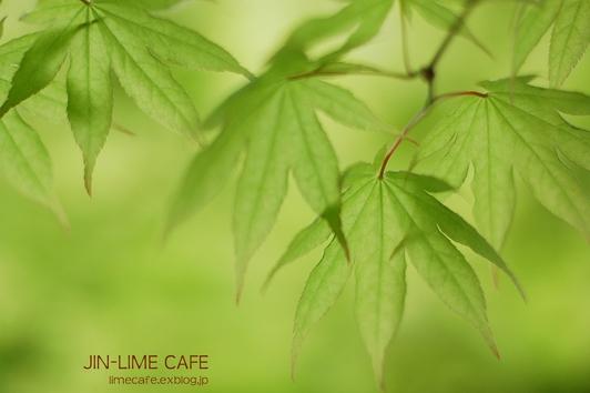 新緑の輝き_e0222506_1423887.jpg
