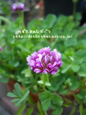 d0170109_220213.jpg