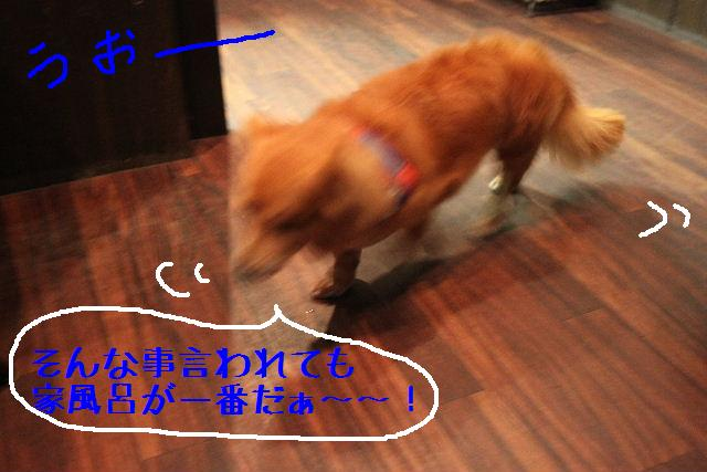 b0130018_16245738.jpg