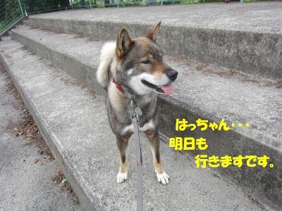 f0143123_20123752.jpg
