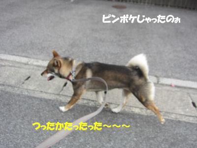 f0143123_2095650.jpg
