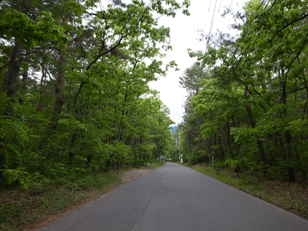 緑色の道_a0014840_2332236.jpg