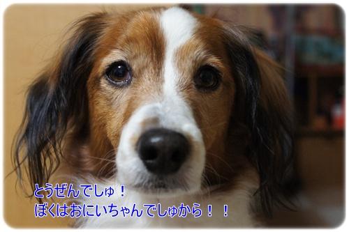 f0080745_23432975.jpg