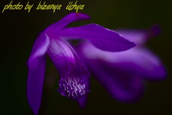 鎌倉海蔵寺『紫欄』_d0086248_6414950.jpg