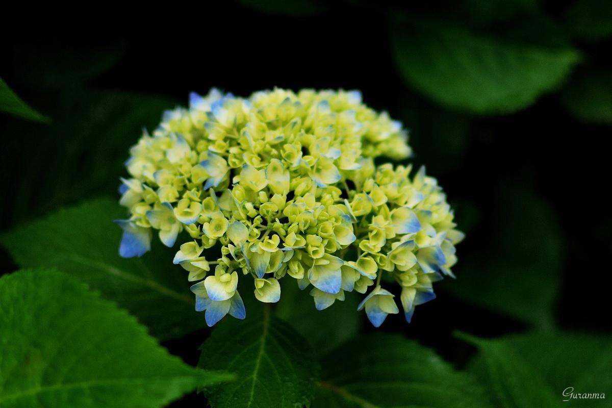 今宵も花で・_c0124055_22312183.jpg