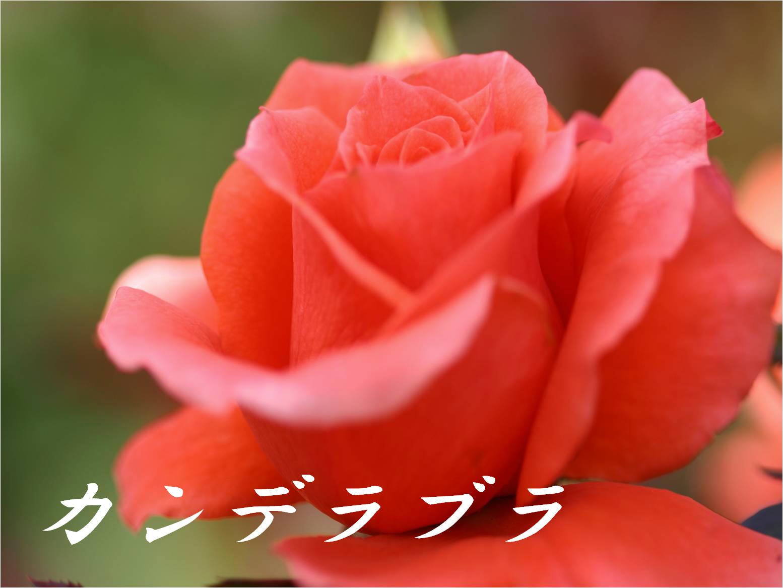 c0217255_1814847.jpg
