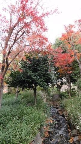 Fall_c0157558_94387.jpg
