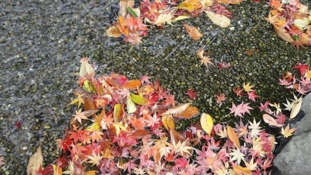 Fall_c0157558_94428.jpg