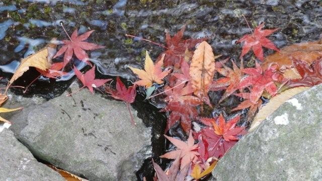 Fall_c0157558_9443561.jpg