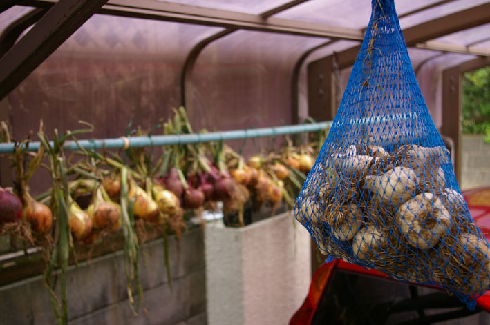 梅雨の晴れ間に、ニンニクとタマネギを全て収穫:5・31_c0014967_19344771.jpg
