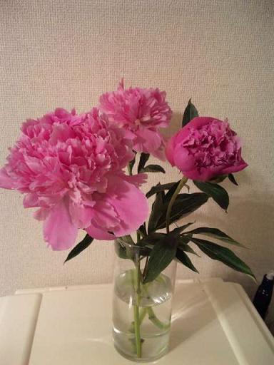 花のように 芍薬_f0186787_22501361.jpg