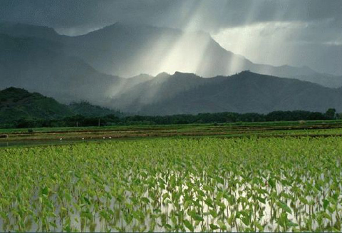 ★[重要] 放射性セシウム『土壌の影響Q&A』~日本土壌肥料学会_a0028694_4515089.jpg