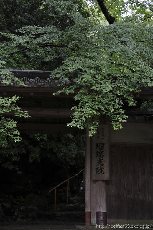 雨の瑠璃光院_f0095094_0365063.jpg