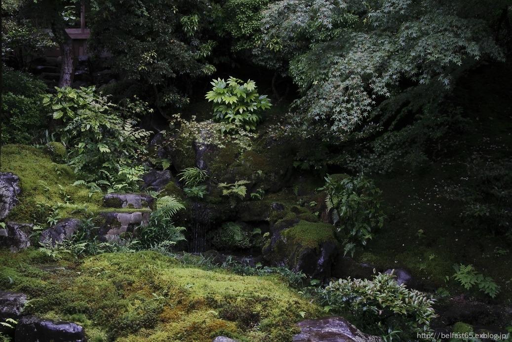 雨の瑠璃光院_f0095094_0381617.jpg