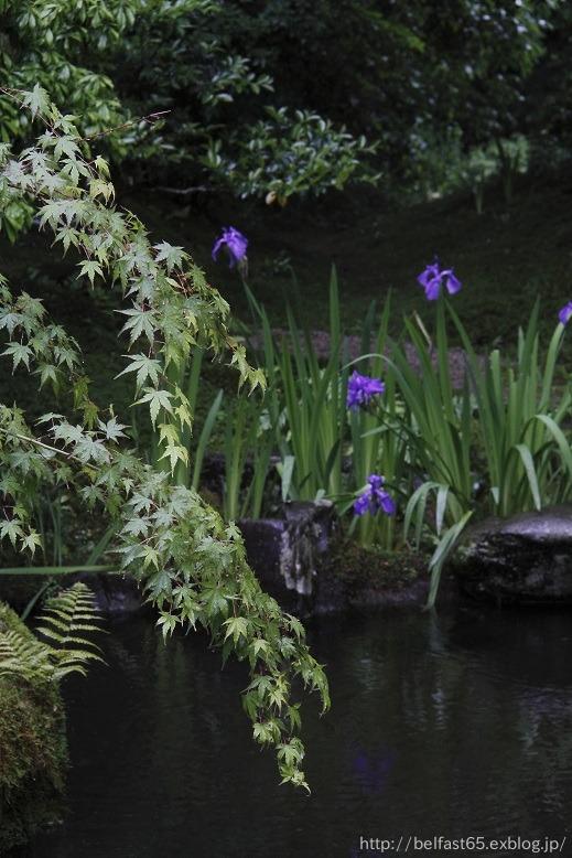 雨の瑠璃光院_f0095094_0384951.jpg