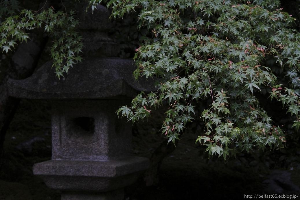 雨の瑠璃光院_f0095094_0385964.jpg
