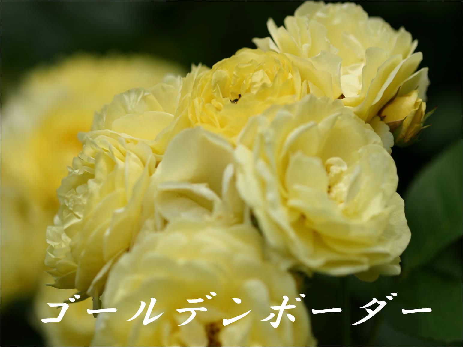 c0217255_1751679.jpg