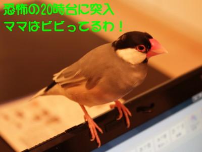 b0158061_2053044.jpg
