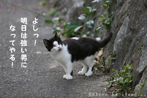 b0153363_21104786.jpg