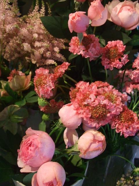 オークリーフ(梅雨時期の花たち)_f0049672_18201552.jpg