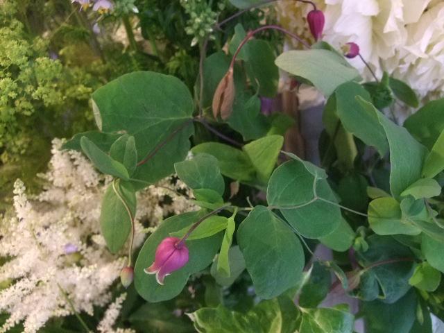 オークリーフ(梅雨時期の花たち)_f0049672_18205473.jpg