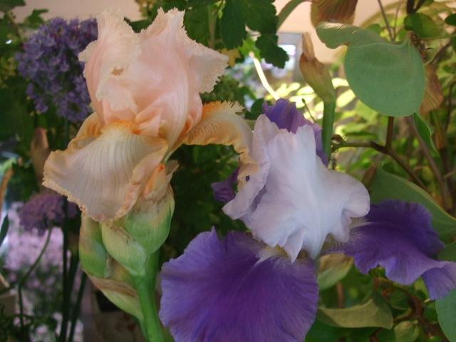 オークリーフ(梅雨時期の花たち)_f0049672_1821488.jpg