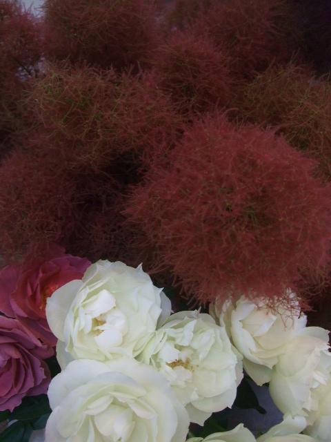 オークリーフ(梅雨時期の花たち)_f0049672_1829313.jpg