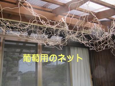 f0003174_1630995.jpg