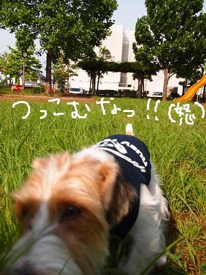 b0092580_182892.jpg