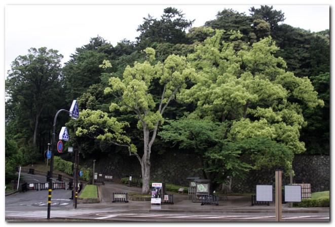 金沢城公園~白鳥路~百間堀_f0079990_838839.jpg