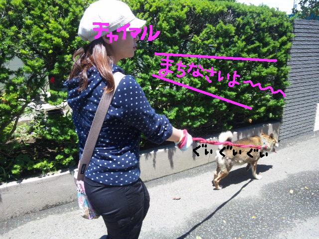 ★UKC JAPAN★ボランティア便りwithチャイマルさん_d0187891_123524.jpg