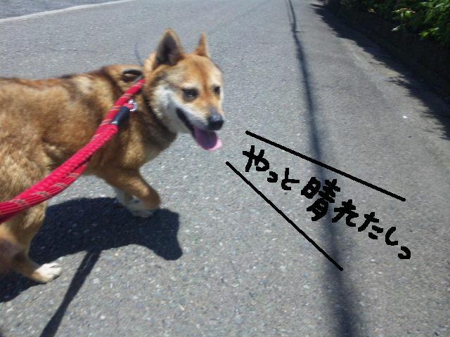★UKC JAPAN★ボランティア便りwithチャイマルさん_d0187891_1235887.jpg