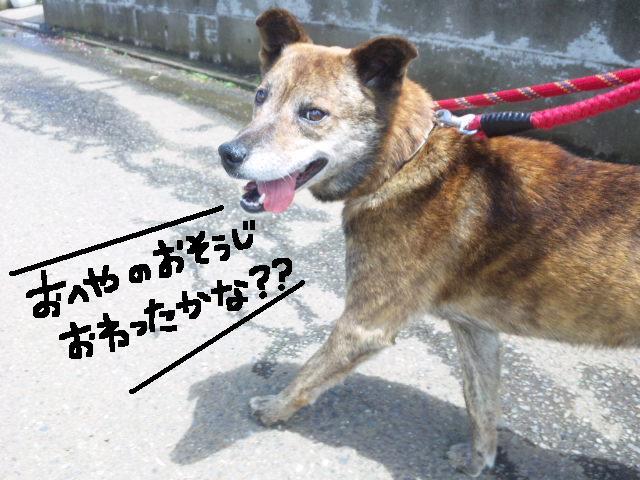 ★UKC JAPAN★ボランティア便りwithチャイマルさん_d0187891_1241461.jpg