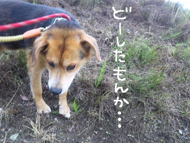★UKC JAPAN★ボランティア便りwithチャイマルさん_d0187891_1242189.jpg